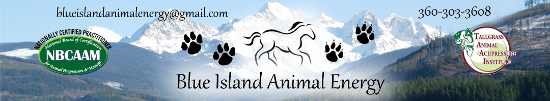 Blue Island Animal Acupressure, LLC / Blue Island Aussies