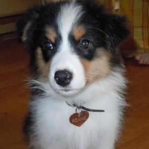 puppy_016